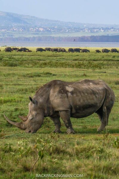 rhinos in lake nakuru kenya
