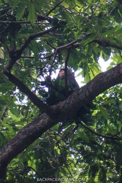 chimpanzee gombe stream tanzania