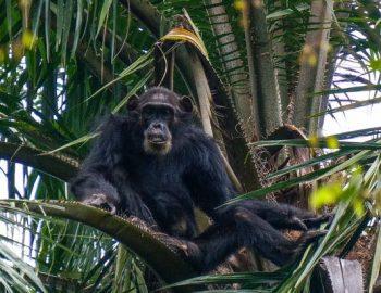 Gombe Stream National Park Chimpanzee Visit