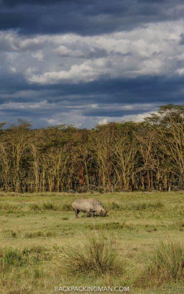 rhinos in lake nakuru