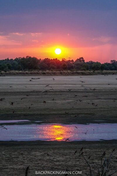 safari in south luangwa