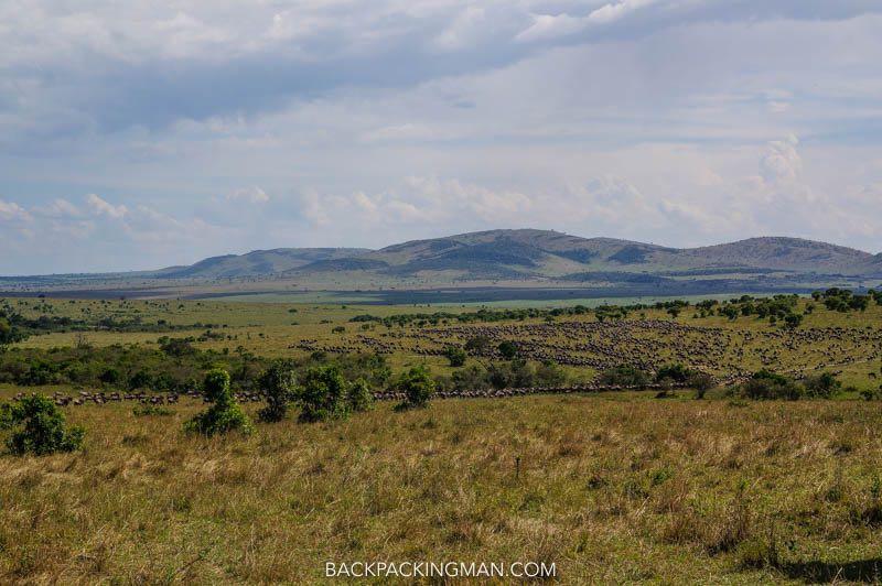 wildebeast migration kenya