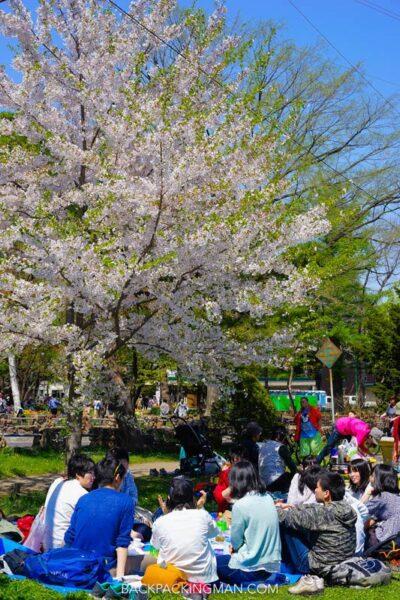 cherry-blossom-sapporo-japan-1