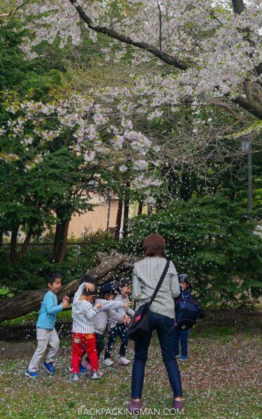 cherry-blossom-sapporo-japan-16