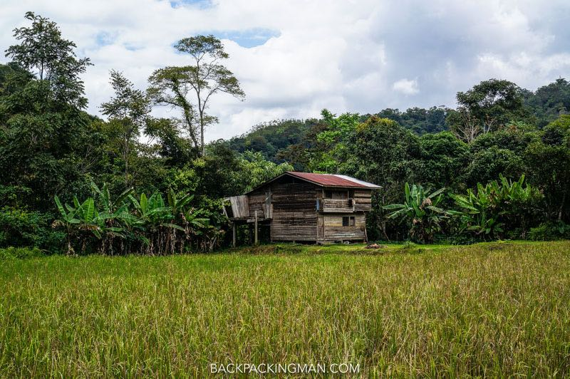 kelabit-highlands-2