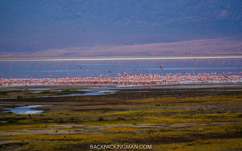 ngorongoro-flamingos-1