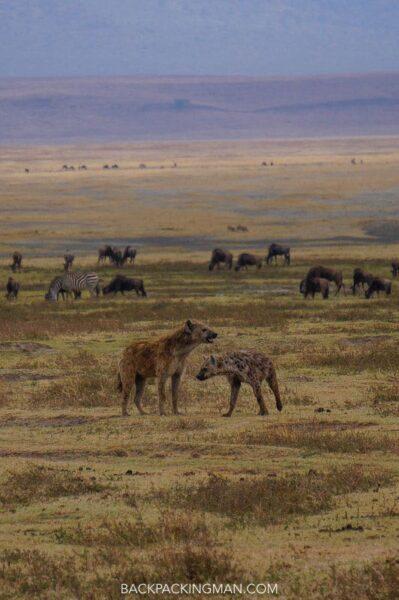 ngorongoro-safari-