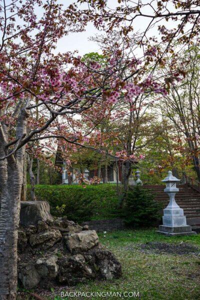 rishiri-rebun-national-park-japan-cherry-blossom-3
