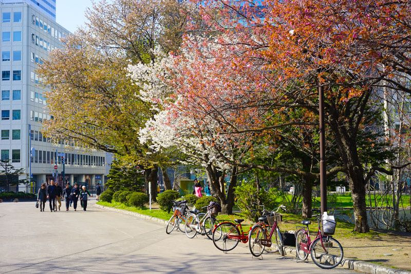 See the Cherry Blossom Season in Sapporo and Hokkaido- Travel Japan