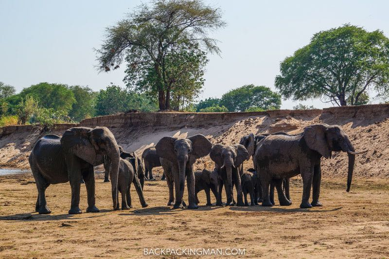 south-luangwa-national-park-3