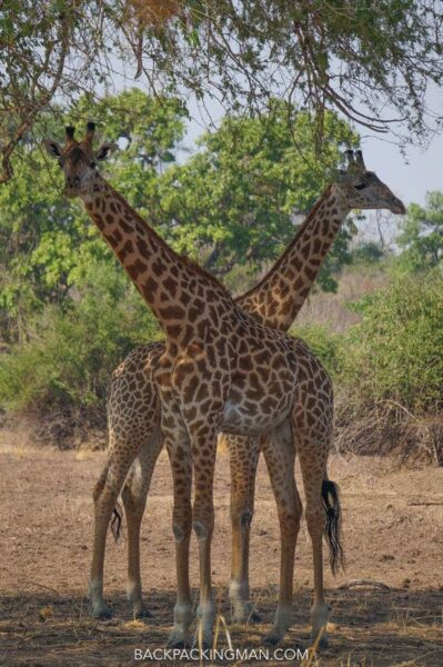 south-luangwa-national-park-4