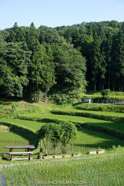 nara rice paddies