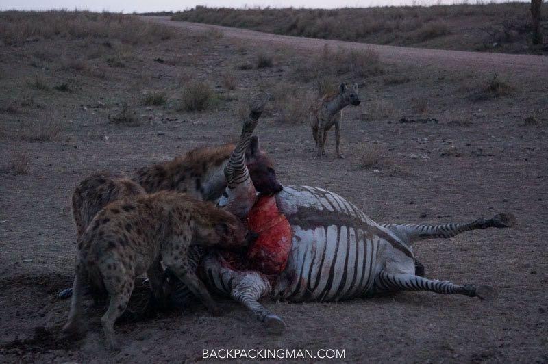 serengeti-death-safari
