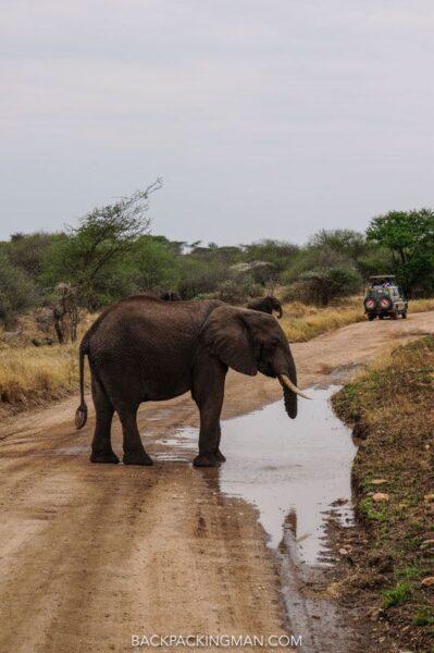 serengeti-safari-6