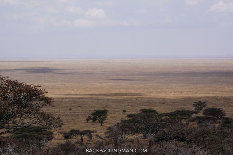 serengeti-savannah