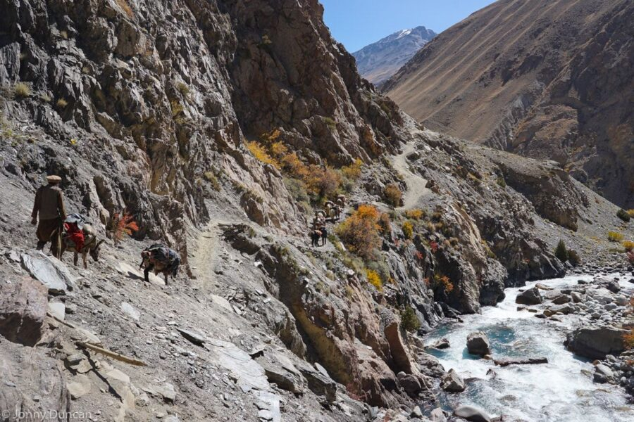 Following a Kyrgyz yak caravan.