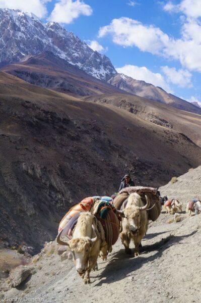 Kyrgyz yak caravan in October.