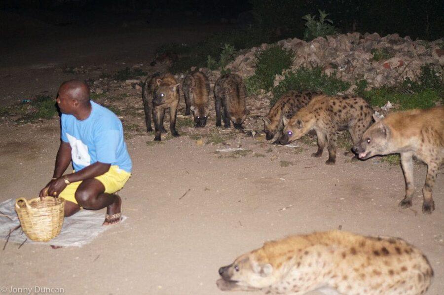 feeding-hyenas-harar