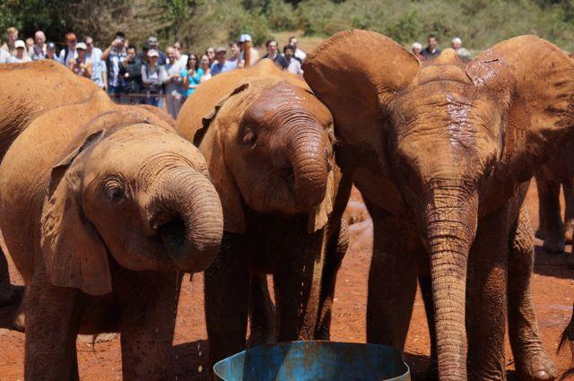 baby elephants nairobi backpacking kenya