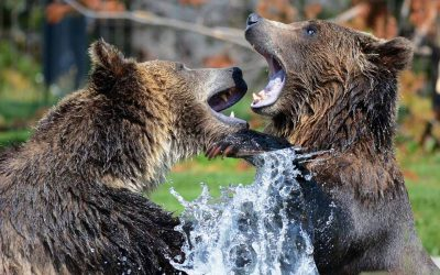 How to Safely See Wildlife in Denali National Park