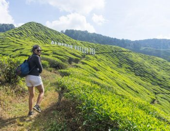 The Cameron Highlands Trip (The Best Attractions In One Day)