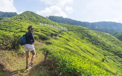 What to do in The Cameron Highlands – A One Day Guide