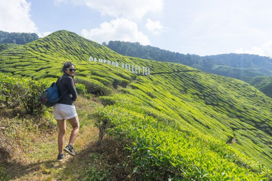 Cameron Highlands Trip (The Best Cameron Highlands Attractions)