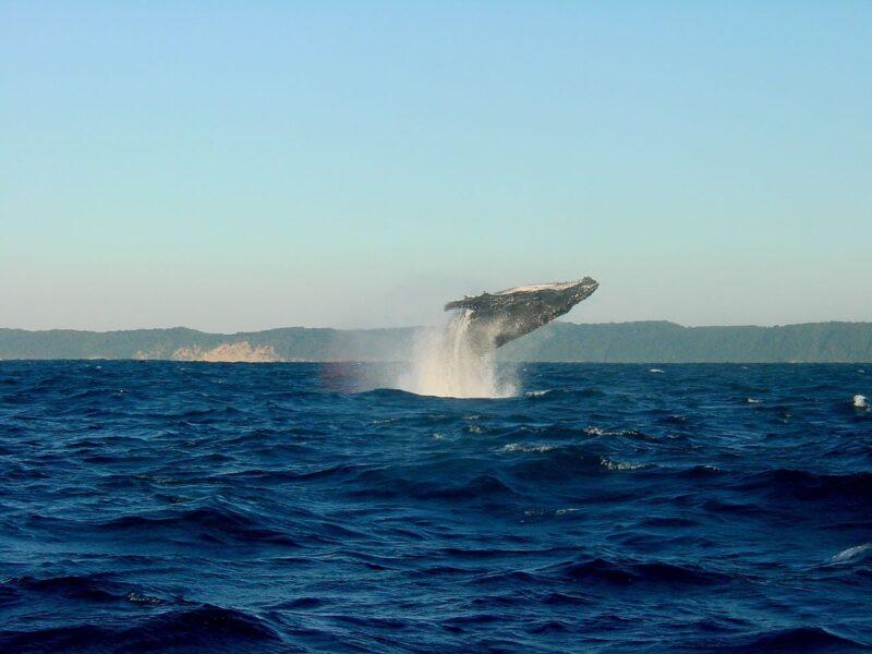 whale reykjavik