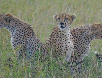 Safaris in East Africa (The Ultimate Guide)