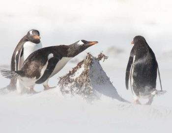 20 Books About The Arctic and Antarctic (Must Reads For Cold Weather)