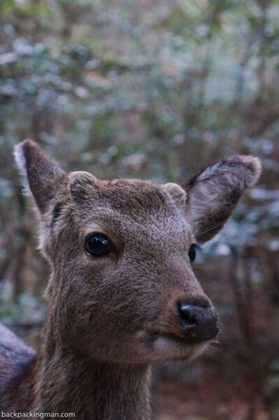 Miyajima deer hiking