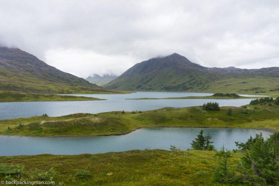 primrose trail Seward Alaska