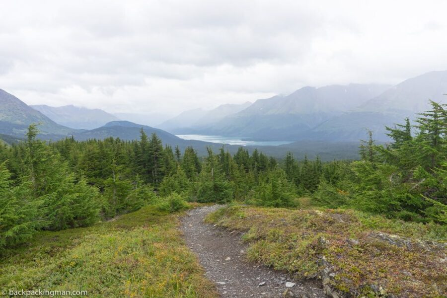 primrose trail Seward ken peninsula Alaska