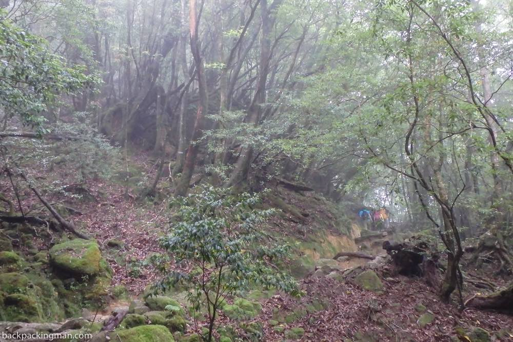 yakushima hiking