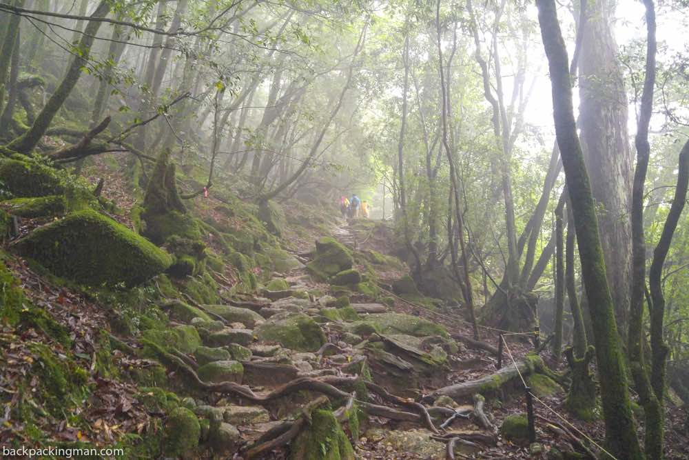 Yakushima Island hiking
