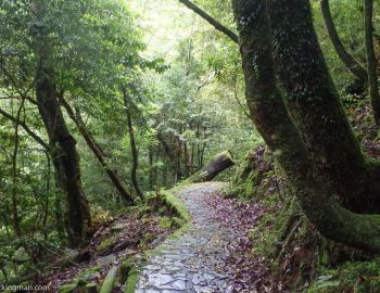 Hiking In Japan (5 Of The Best Hikes You Can Do)