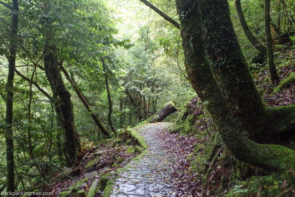 Yakushima Island hiking forest
