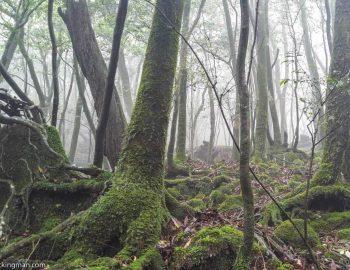 Hiking In Yakushima Forest (The Land of Enchantment)