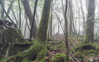 Yakushima Island (Hiking In The Shiratani Unsuikyo Forest)