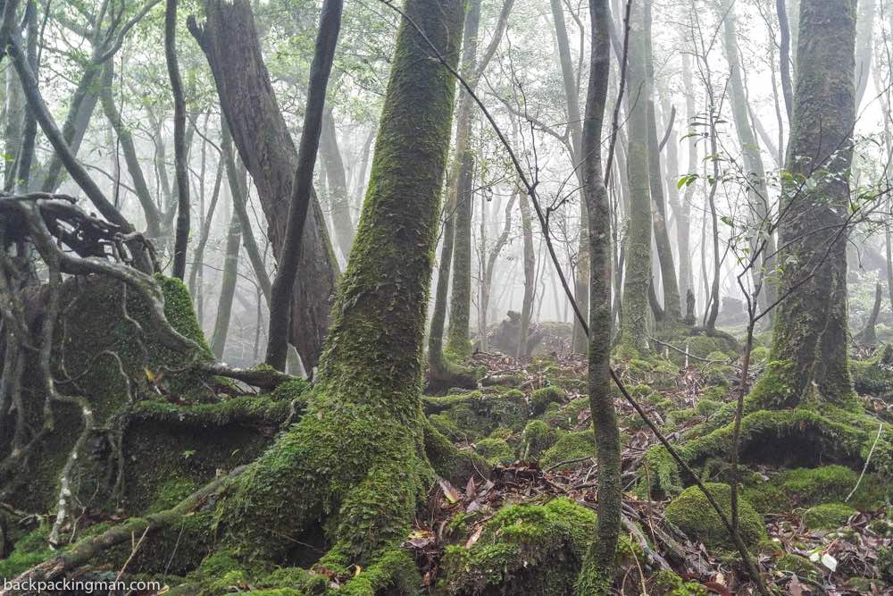 Hiking In Yakushima Forest (The Land of Enchantment)