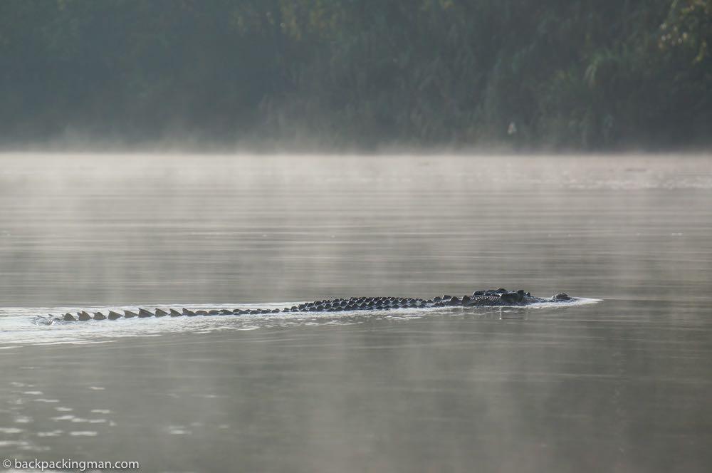 sarawak crocodile