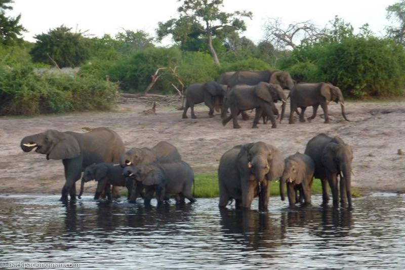 chose safari from Livingstone