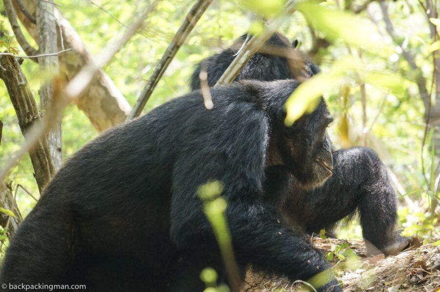 gombe national park