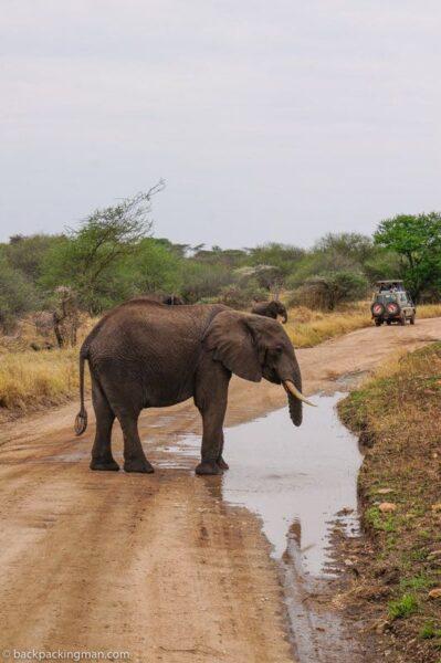budget safari Serengeti backpacking Tanzania