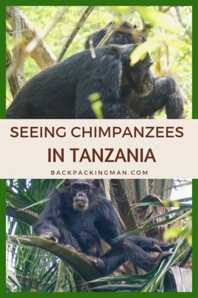 backpacking Tanzania gombe chimpanzee