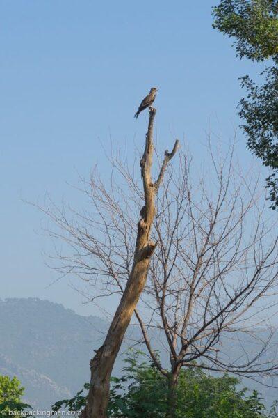 f9 park Islamabad eagle