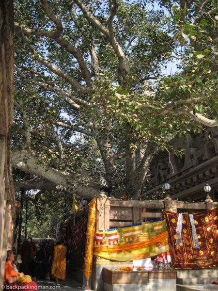 buddha Bodhi tree Bodh Gaya