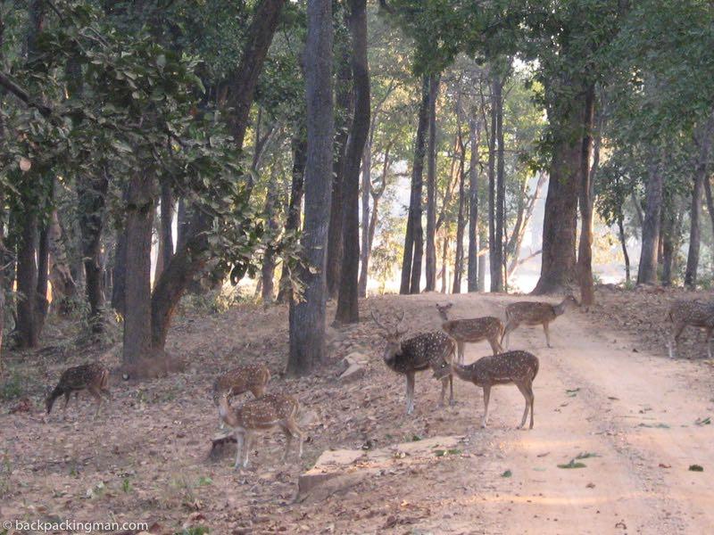 deers in india