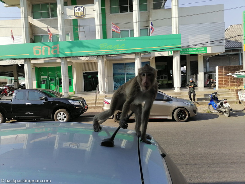 monkeys in lopburi