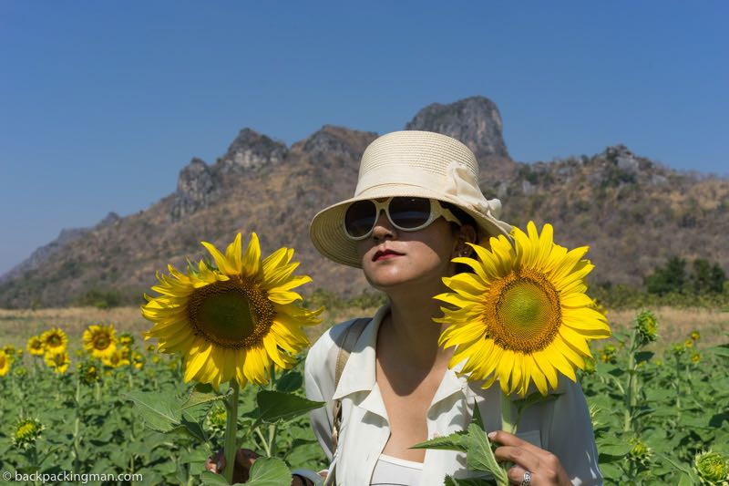 lopburi attractions sunflowers